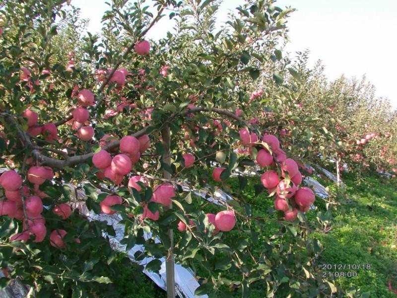 关于果园节水灌溉
